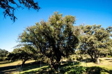 Ruta de los árboles - Alcornoque