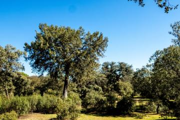 Ruta de los árboles - Sabina