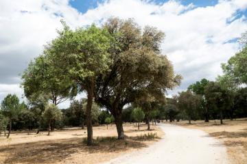 Ruta de los árboles - Peralillo