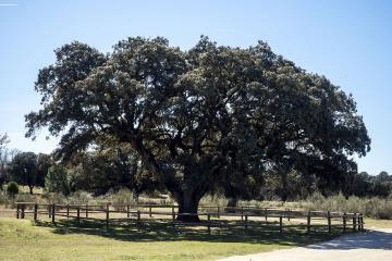 Ruta de los árboles - La invencible